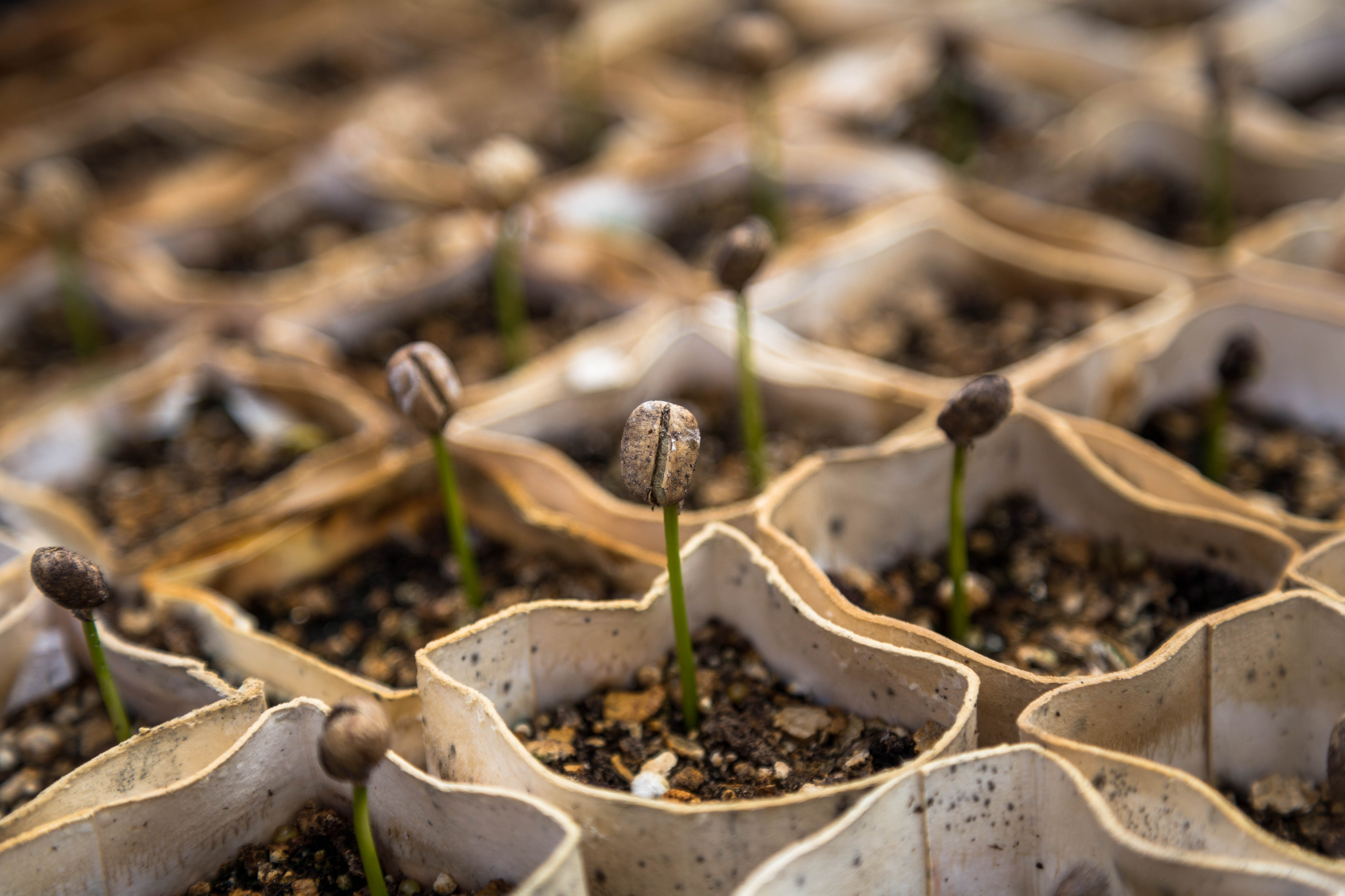 Plant the Seeds of Success When Battling a Crisis
